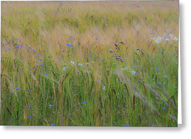 Dreamy Meadow Greeting Card