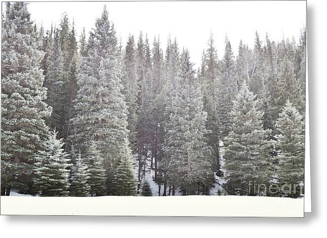 Greeting Card featuring the photograph Dreamy Pine Snow Forest Landscape by Andrea Hazel Ihlefeld