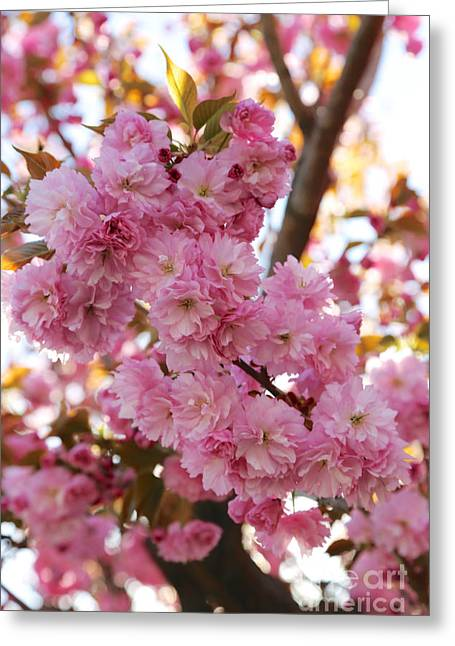 Dreamy Pink Blossoms Greeting Card by Carol Groenen