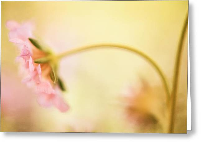 Greeting Card featuring the photograph Dreamy Pink Flower by Bonnie Bruno