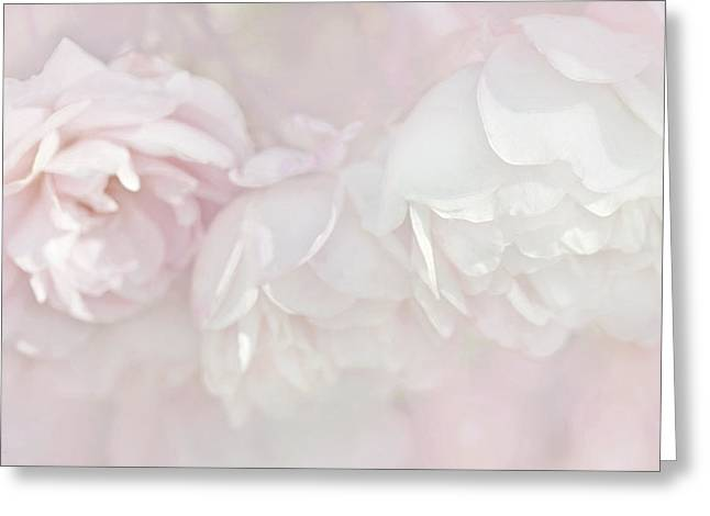 Dreamy Rose Flowers In Pink White Pastels Greeting Card