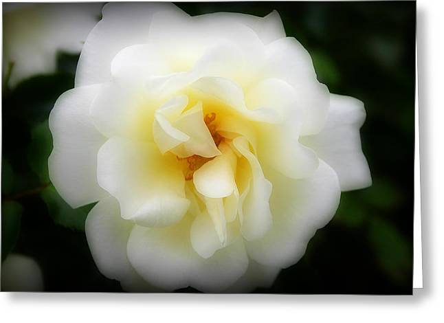 Dreamy White Rose Greeting Card