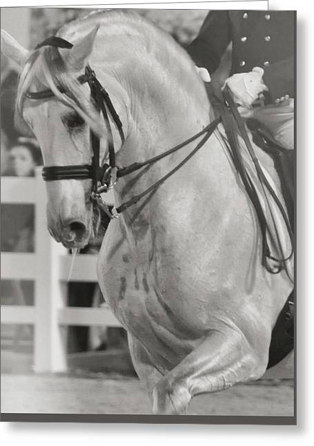 Dressage Perfection Greeting Card by JAMART Photography