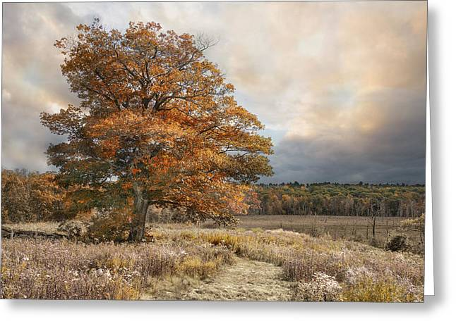 Greeting Card featuring the photograph Dressed In Autumn by Robin-Lee Vieira