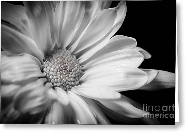 Dressed In Black And White Greeting Card