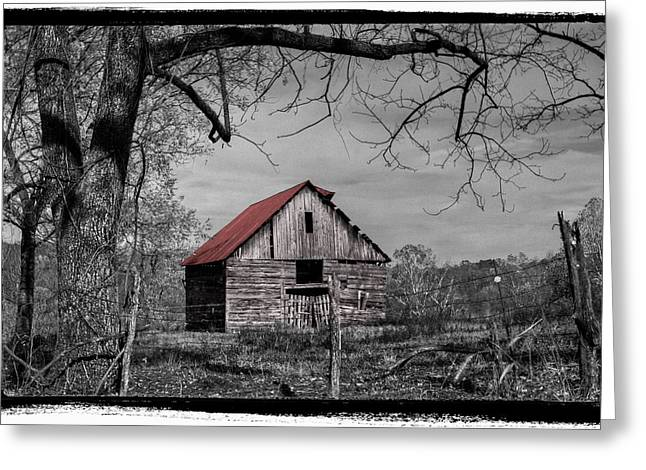 Tennessee Farm Greeting Cards - Dressed In Red Greeting Card by Debra and Dave Vanderlaan