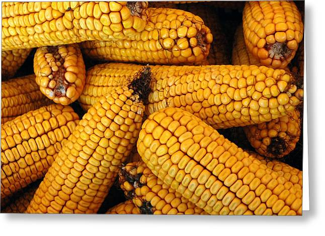 Dried Corn Cobs Greeting Card