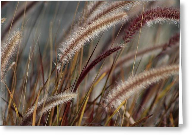 Dried Desert Grass Plumes In Honey Brown Greeting Card