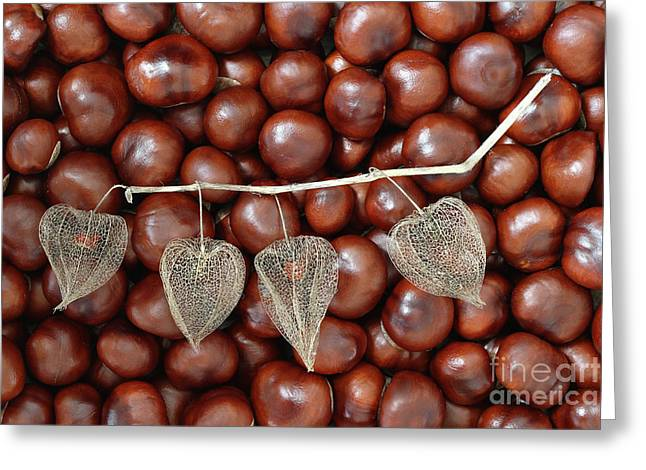 Dried Fruits Of The Cape Gooseberry And Chestnuts Greeting Card