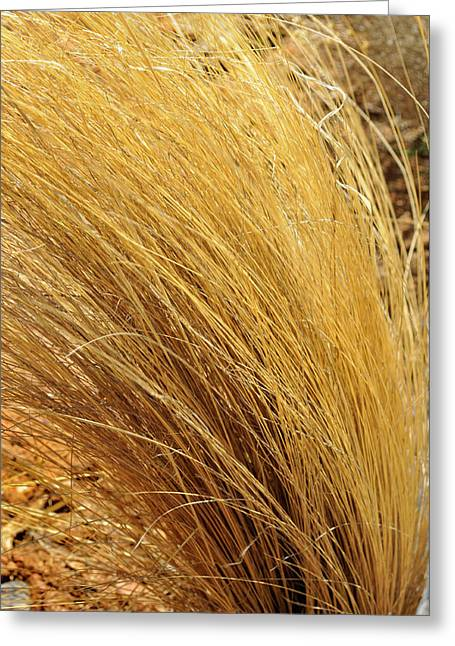 Dried Grass Greeting Card