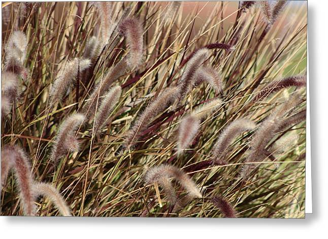 Dried Grasses In Burgundy And Toasted Wheat Greeting Card