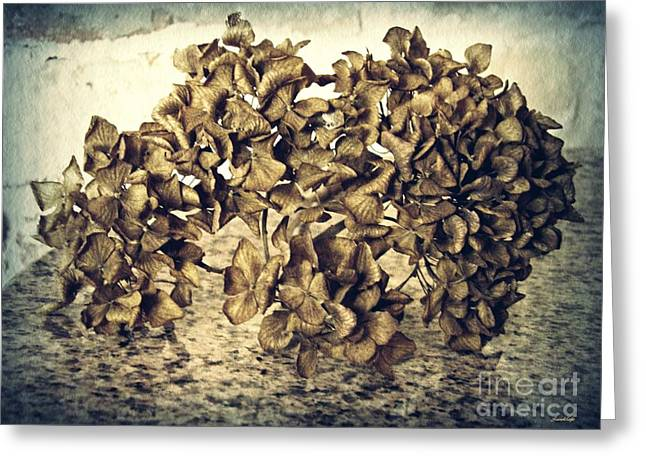 Dried Hydrangea 1 Greeting Card