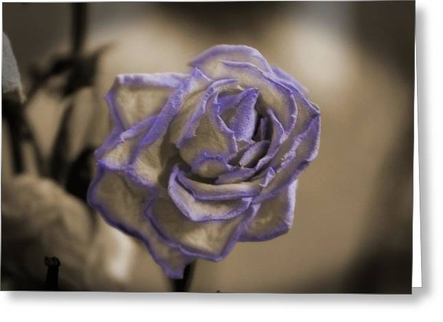 Dried Rose In Sienna And Ultra Violet Greeting Card