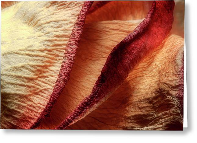 Dried Rose Petals I Greeting Card by Tom Mc Nemar