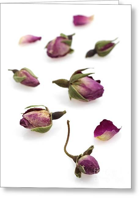 Dried Rosebuds Greeting Card by Gerard Lacz