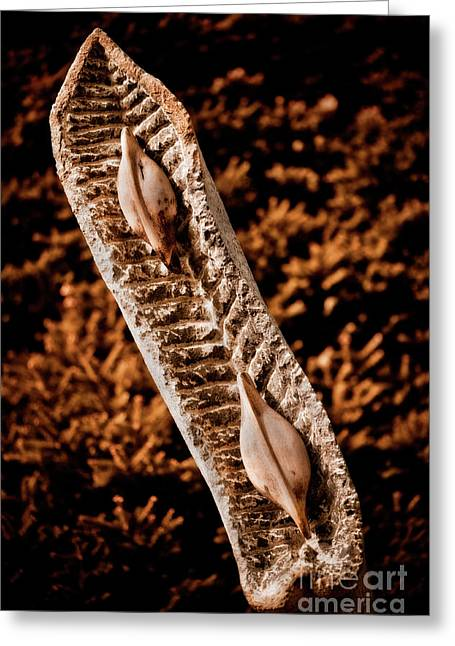 Dried Seed Pod Greeting Card by Venetta Archer