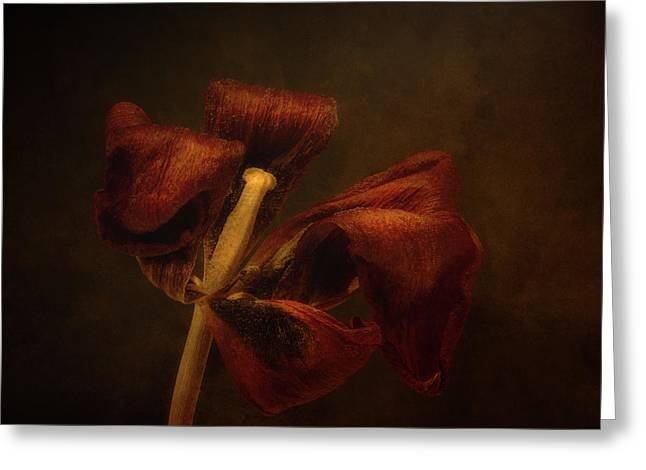 Dried Tulip Blossom 2 Greeting Card by Scott Norris