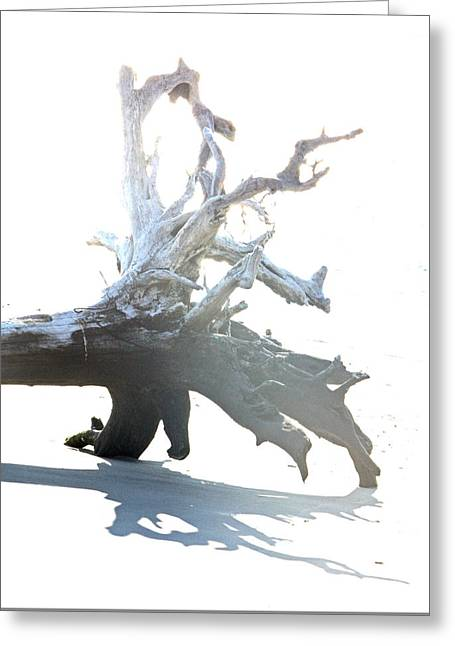 Drift Wood Greeting Card