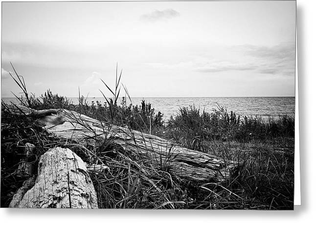 Drift Wood Greeting Card by Karen Stahlros