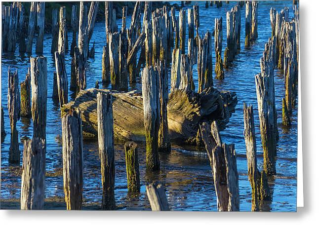 Driftwood Among Pile Posts Greeting Card