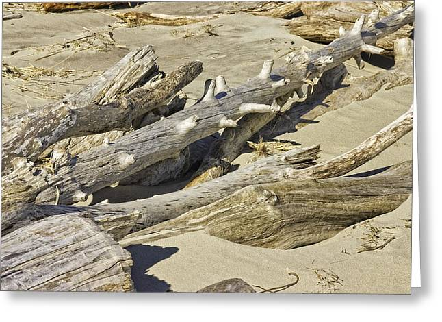 Driftwood And Sand On Popham Beach On The Coast Of Maine Greeting Card by Keith Webber Jr