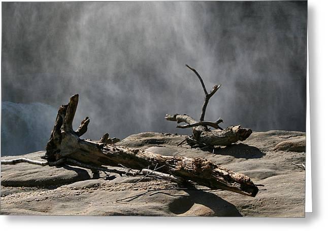 Driftwood Greeting Card by Andrei Shliakhau