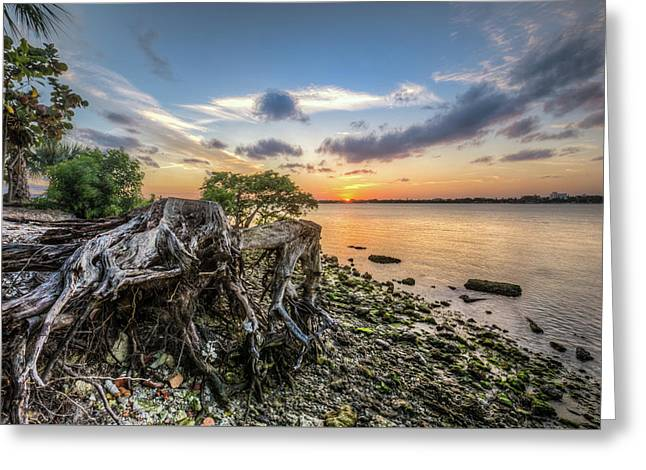 Greeting Card featuring the photograph Driftwood At The Edge by Debra and Dave Vanderlaan