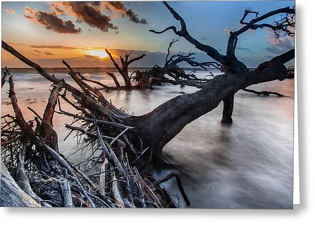 Driftwood Beach 6 Greeting Card