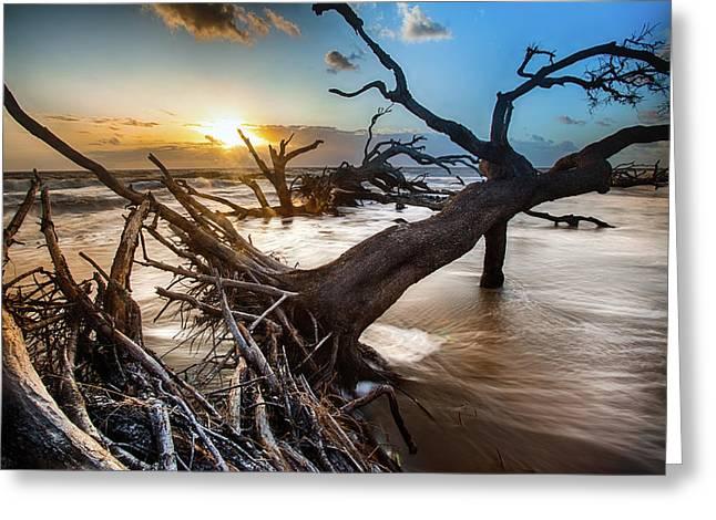 Driftwood Beach 7 Greeting Card