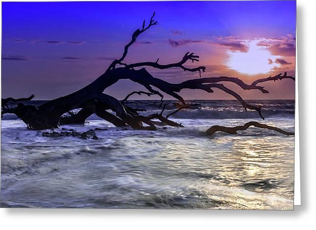 Driftwood Beach 9 Greeting Card