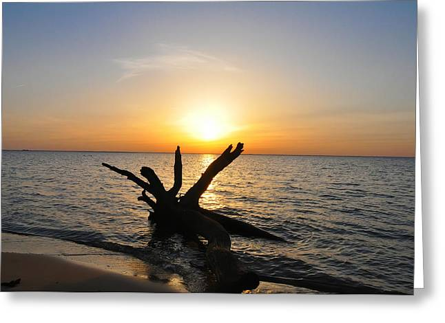 Driftwood Beach Greeting Card by Bill Cannon
