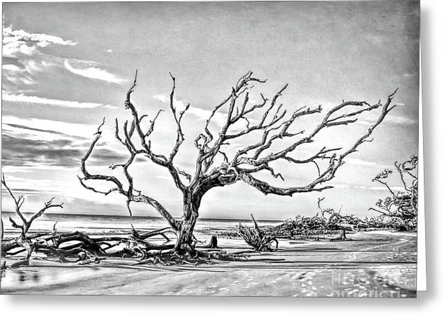 Greeting Card featuring the photograph Driftwood Beach - Black And White by Kerri Farley