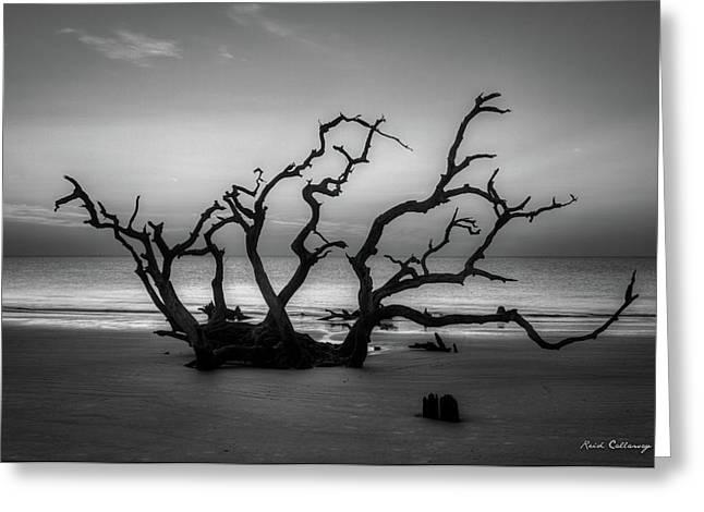 Driftwood Beach Dawn Jekyll Island Georgia Greeting Card by Reid Callaway