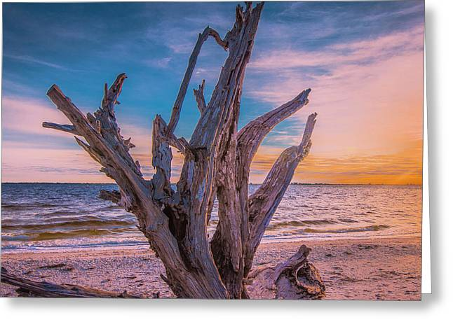 Greeting Card featuring the photograph Driftwood Beach by Steven Ainsworth