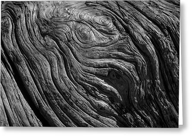 Driftwood Black And White Greeting Card by Garry Gay