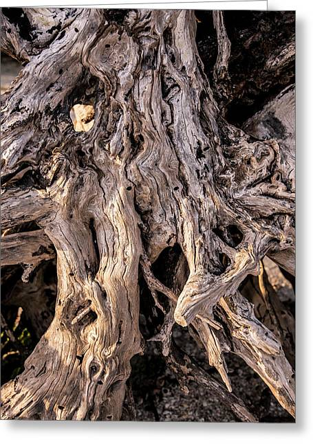 Greeting Card featuring the photograph Driftwood Close-up by Steven Ainsworth