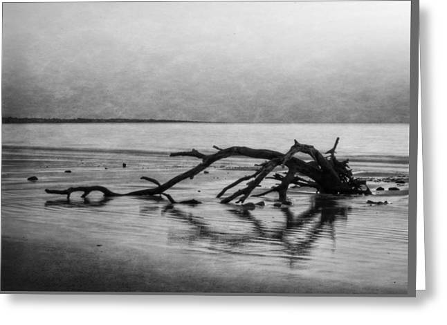 Driftwood Dream In Black And White Greeting Card