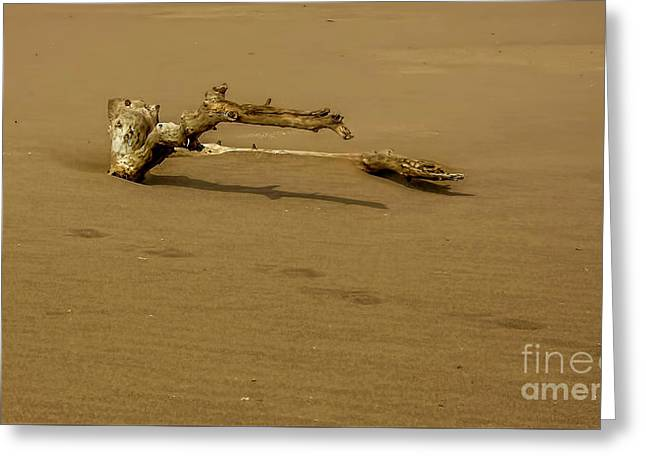 Driftwood Greeting Card by Elijah Knight
