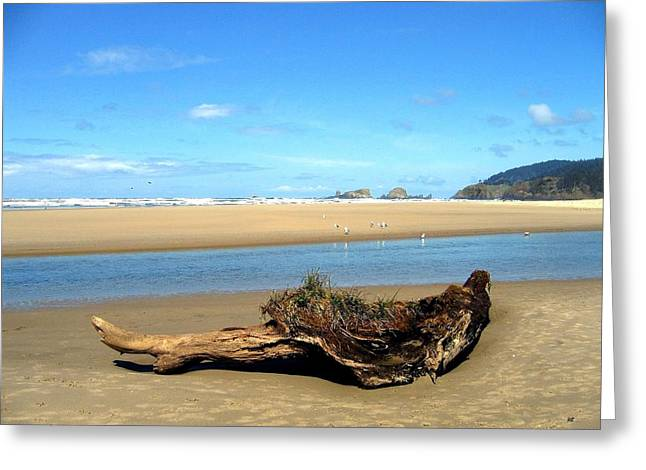 Driftwood Garden Greeting Card by Will Borden
