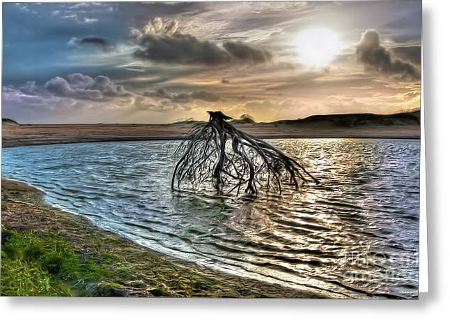 Driftwood In A Tide Pool Outer Banks Ap Greeting Card
