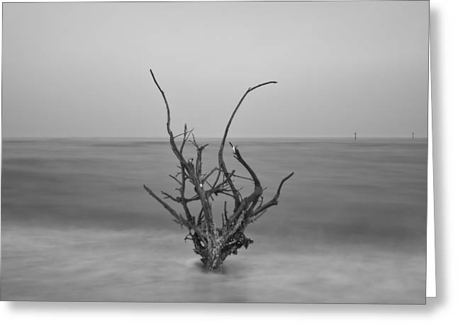 Driftwood Infrared 64 Greeting Card by Rolf Bertram