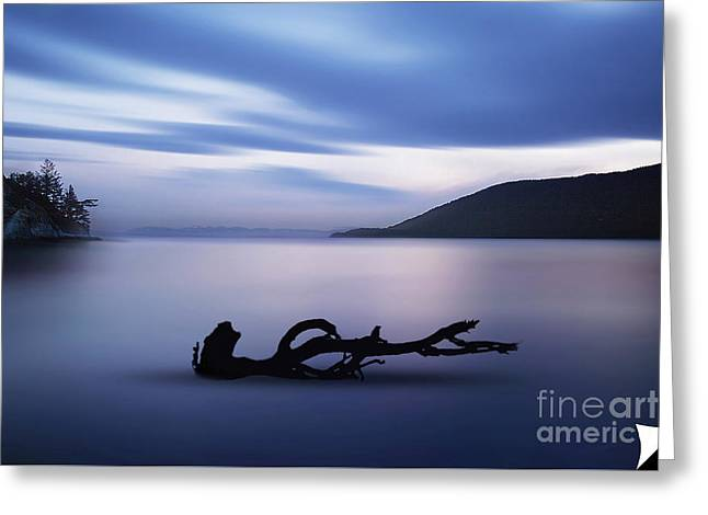 Greeting Card featuring the photograph Driftwood by Jim  Hatch