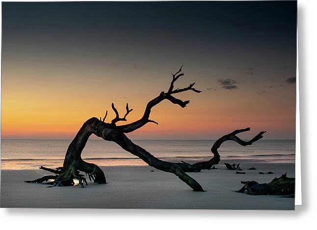 Driftwood Morning Greeting Card