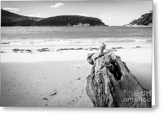 Driftwood On Beach Black And White Greeting Card