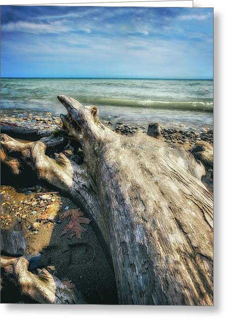 Greeting Card featuring the photograph Driftwood On Beach - Grant Park - Lake Michigan Shoreline by Jennifer Rondinelli Reilly - Fine Art Photography