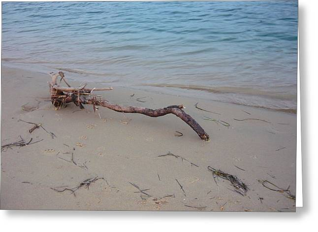 Driftwood On Ocean Beach Greeting Card by Adrianne Wood