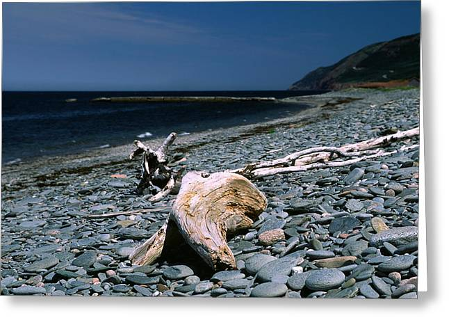 Driftwood On Rocky Beach Greeting Card by Sally Weigand