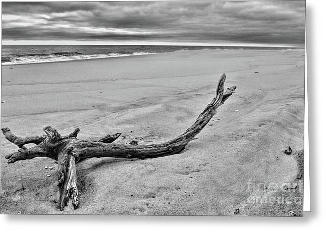 Driftwood On The Beach In Black And White Greeting Card by Paul Ward
