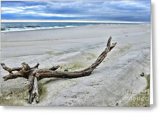 Driftwood On The Beach Greeting Card by Paul Ward