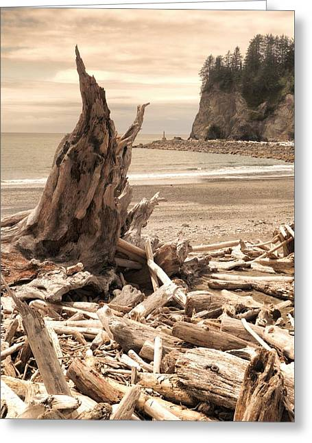 Driftwood On The Coast Of Washington Greeting Card by Dan Sproul
